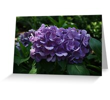 Intense Purple Hydrangea  Greeting Card