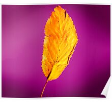 Purple in Autumn Leaf Poster