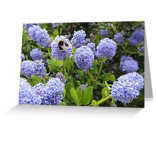 Bee Kind To Bees Greeting Card