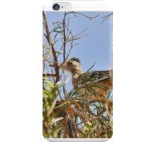 Roadrunner In The Desert Willow Tree iPhone Case/Skin