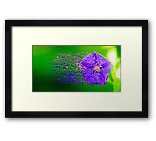 Digitally manipulated purple garden flower with lush green background  Framed Print