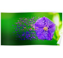 Digitally manipulated purple garden flower with lush green background  Poster