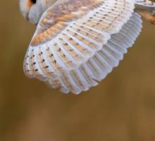 BARN OWL HUNTING Sticker