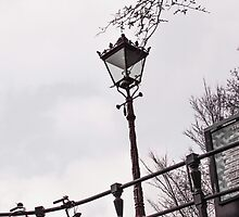 Lamp along Amsterdam canal bank by visualimagery