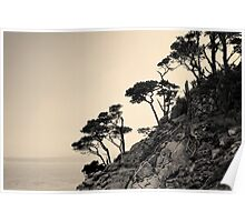 Point Lobos III Toned Poster