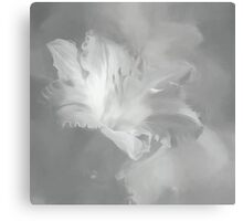 Lily In Fog Monochrome Canvas Print