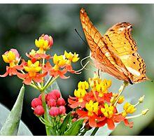 Orange Butterfly on Tropical Lantana Flowers Photographic Print
