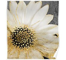 Gold and White Daisy Poster