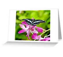 African Blue Banded Swallowtail Butterfly Greeting Card