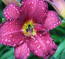Today's Lily by Ray Clarke