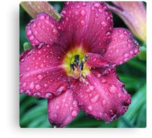 Today's Lily Canvas Print