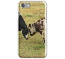 Bulls Squaring Off in a Pasture iPhone Case/Skin