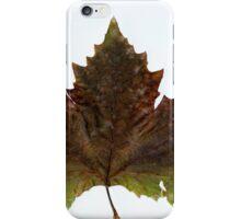 Autumn tree leaf iPhone Case/Skin