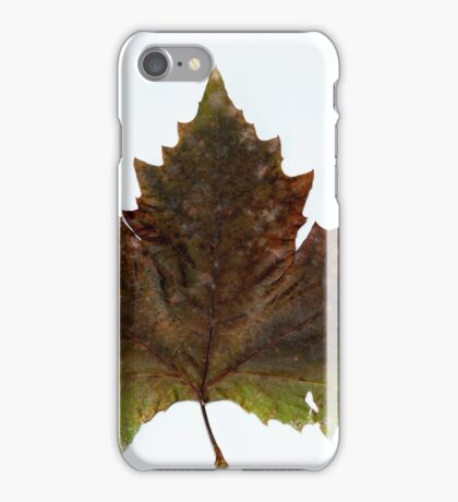 Autumn tree leaf iPhone Case/Skin