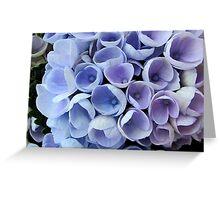 Blue Hortensia Greeting Card