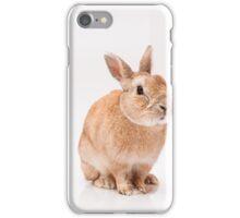 funny rabbit iPhone Case/Skin