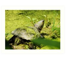 Snapping Turtle & Frog Tanning. Art Print