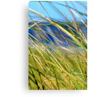 Sea Grass, Plum Island, Massachusetts Canvas Print