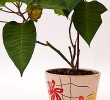 plant in a pot by arnau2098
