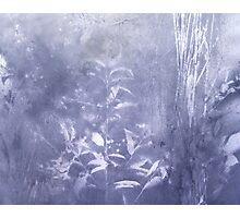 periwinkle blue rush Photographic Print