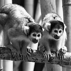 Bolivian Spider Monkeys at Dublin Zoo  by Martina Fagan