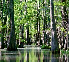Atchafalaya Basin Canal by Mike Capone