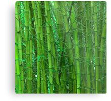 Green and serene bamboo Metal Print