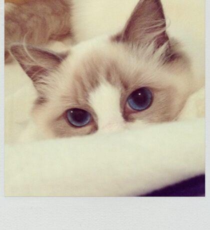 Hide and Seek Cat Sticker
