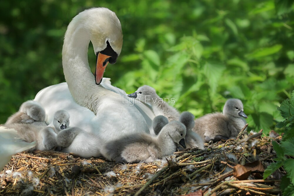 Mother love by Lyn Evans