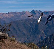 condors of peru by gruntpig