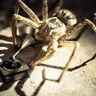 Arachnophonograph by Randy Turnbow