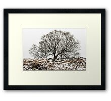 Surrounded by Winter Framed Print