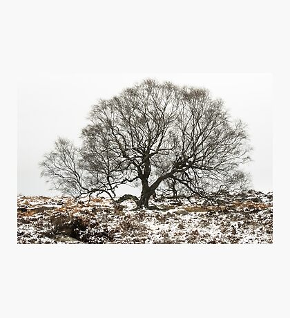 Surrounded by Winter Photographic Print
