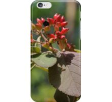 flower in nature iPhone Case/Skin