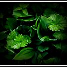 Shades of Green by katpix
