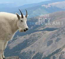 goat where the f is this goat??? by noskap