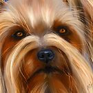 Sweet Silky Terrier - dog art by Michelle Wrighton by Michelle Wrighton