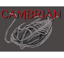 Cambrian Trilobite Photographic Print