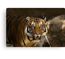 Tiger Wildcat Canvas Print