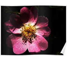 Bright Pink Macro Detailed Flower Poster