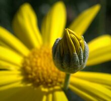 Pushing Up Daisies by Ben Loveday