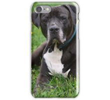 American Pitt Bull Terrier iPhone Case/Skin