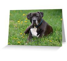 American Pitt Bull Terrier Greeting Card