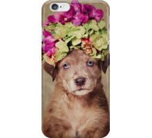 Shelter Pets Project - Chaleesi iPhone Case/Skin