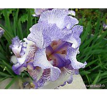 Inkblot Iris Photographic Print