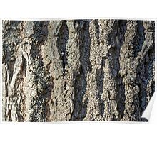 Detail on the bark of a big old tree Poster