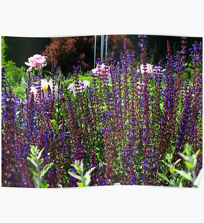A little patch of garden Poster