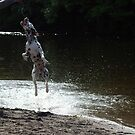 Dalmatian dog jumping from water by turniptowers