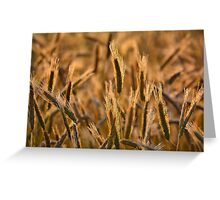 Dewy Spikes Greeting Card