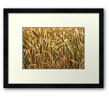 Ripening Wheat Field Framed Print